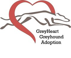 GreyHeart Greyhound Adoption of Michigan